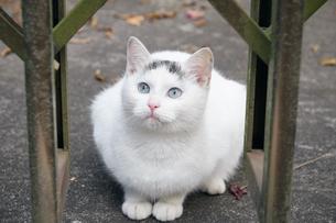 日本の屋外で暮らす子猫の写真素材 [FYI01171143]