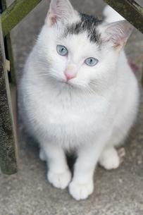 日本の屋外で暮らす子猫の写真素材 [FYI01171145]