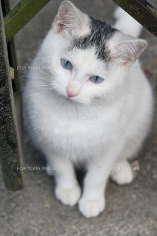 日本の屋外で暮らす子猫の写真素材 [FYI01171146]