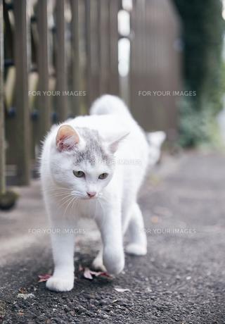 日本の屋外で暮らす子猫の写真素材 [FYI01171150]