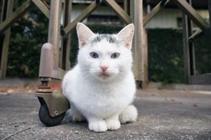 日本の屋外で暮らす子猫の写真素材 [FYI01171152]
