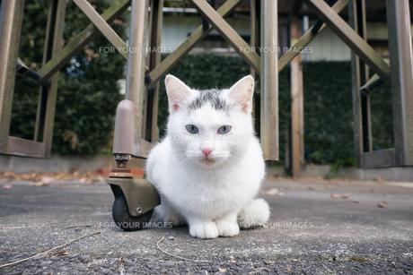 日本の屋外で暮らす子猫の写真素材 [FYI01171153]