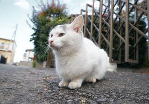 日本の屋外で暮らす子猫の写真素材 [FYI01171155]