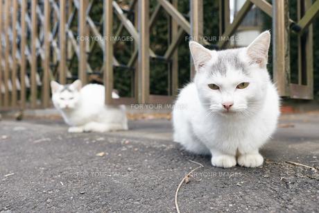 日本の屋外で暮らす子猫の写真素材 [FYI01171157]