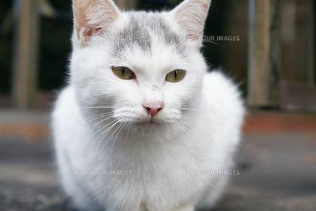 日本の屋外で暮らす子猫の写真素材 [FYI01171158]