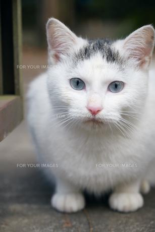 日本の屋外で暮らす子猫の写真素材 [FYI01171160]