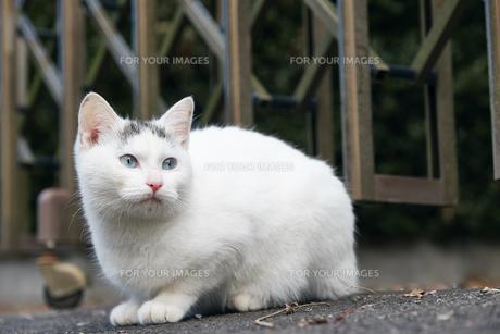 日本の屋外で暮らす子猫の写真素材 [FYI01171162]