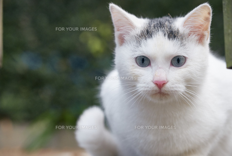 日本の屋外で暮らす子猫の写真素材 [FYI01171165]