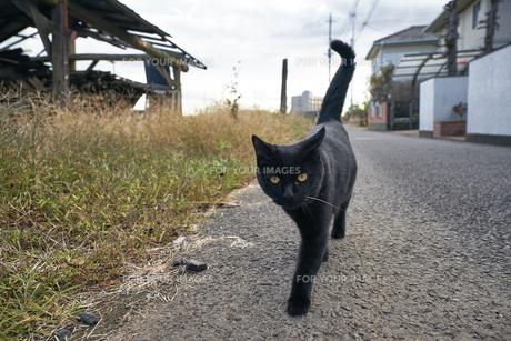 日本の屋外で暮らす黒猫の写真素材 [FYI01171176]
