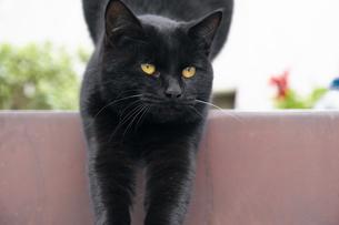階段で体を伸ばす黒猫の写真素材 [FYI01171182]