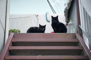 階段の上の黒猫の親子の写真素材 [FYI01171183]