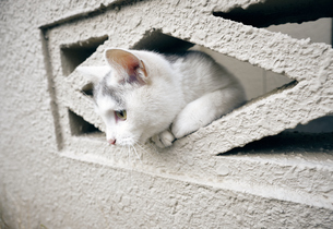 ブロックの隙間から顔を出す子猫の写真素材 [FYI01171185]