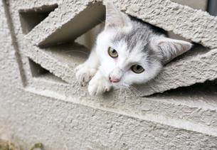 ブロックの隙間から顔を出す子猫の写真素材 [FYI01171186]