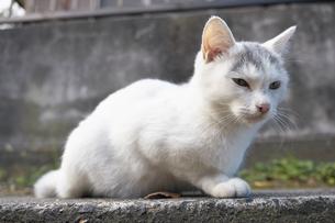日本の屋外で暮らす子猫の写真素材 [FYI01171190]