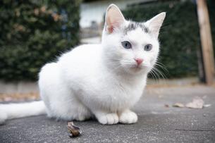 日本の屋外で暮らす子猫の写真素材 [FYI01171191]