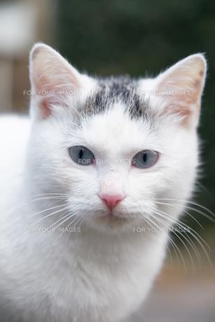日本の屋外で暮らす子猫の写真素材 [FYI01171192]