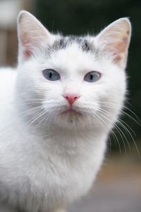日本の屋外で暮らす子猫の写真素材 [FYI01171193]