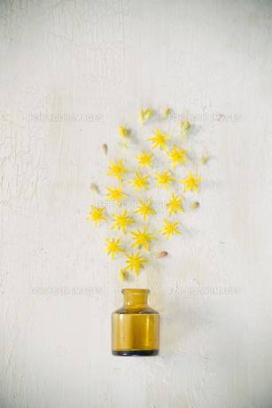 アンティークのガラスの小瓶から噴き出した黄色い多肉植物の花たちの写真素材 [FYI01171253]