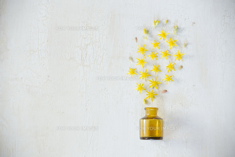 アンティークのガラスの小瓶から噴き出した黄色い多肉植物の花たちの写真素材 [FYI01171255]