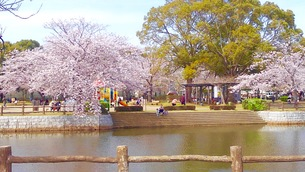 日本の 春  桜  池  公園  空  家族愛①の写真素材 [FYI01171388]