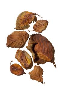 落ち葉のある静物の写真素材 [FYI01171828]