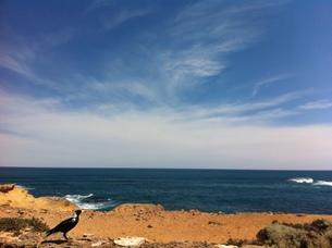 空と鳥の写真素材 [FYI01172115]