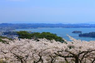 春の松島の写真素材 [FYI01172295]
