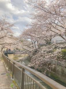桜と橋・川辺の写真素材 [FYI01172371]