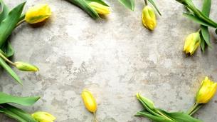 黄色いチューリップのフレーム 銀色背景の写真素材 [FYI01172802]