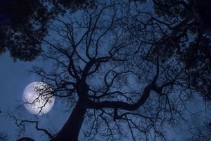 月夜の樹の写真素材 [FYI01173061]