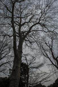 冬の樹の写真素材 [FYI01173062]