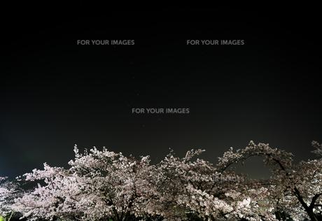 夜桜と北斗七星の写真素材 [FYI01173126]