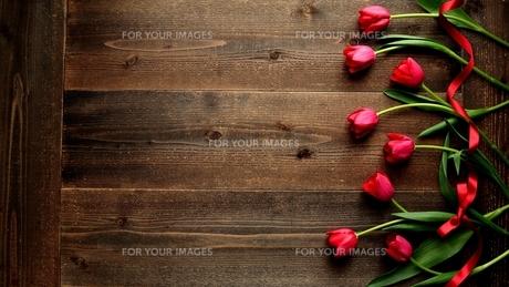 赤色のチューリップたくさんとリボン 黒木材背景 の写真素材 [FYI01173284]