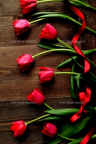 赤色のチューリップたくさんとリボン 黒木材背景 の写真素材 [FYI01173285]