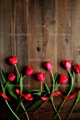 赤色のチューリップたくさんとリボン 黒木材背景 の写真素材 [FYI01173286]