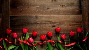 赤色のチューリップたくさんとリボン 黒木材背景 の写真素材 [FYI01173288]