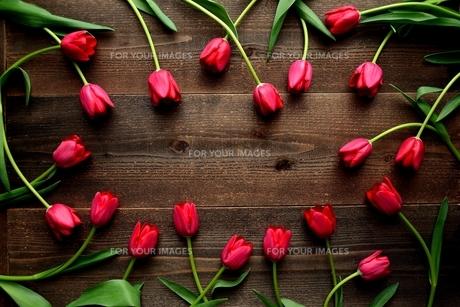 赤色のチューリップたくさん 黒木材背景 の写真素材 [FYI01173289]