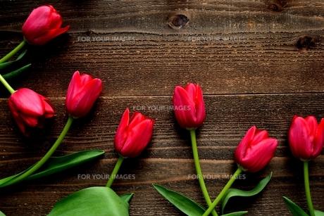 赤色のチューリップたくさん 黒木材背景 の写真素材 [FYI01173290]
