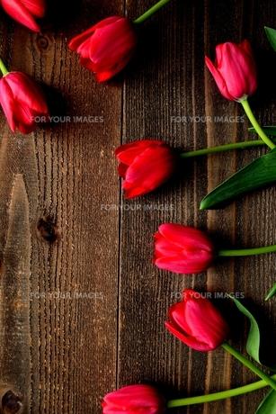赤色のチューリップたくさん 黒木材背景 の写真素材 [FYI01173293]
