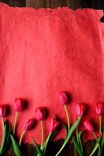 たくさん並んだ赤色のチューリップと赤い紙  の写真素材 [FYI01173298]