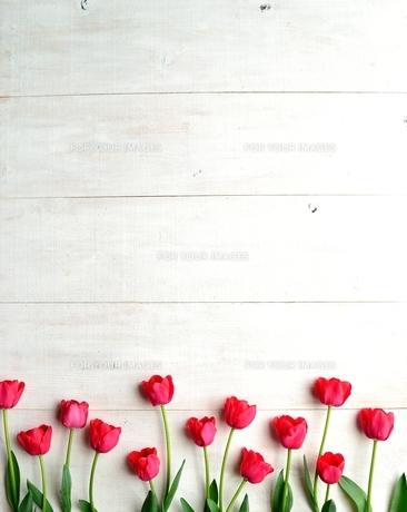 たくさん並んだ赤色のチューリップ 白木材背景の写真素材 [FYI01173335]