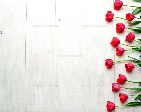 たくさん並んだ赤色のチューリップ 白木材背景の写真素材 [FYI01173337]