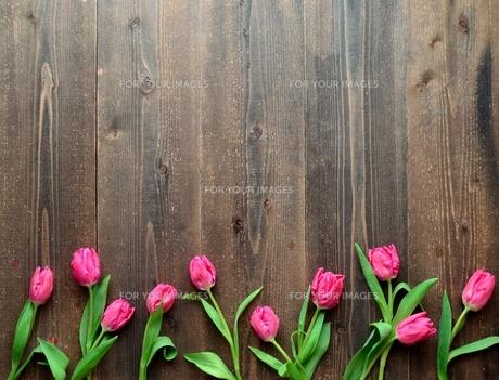 ピンク色のチューリップたくさん 黒木材背景の写真素材 [FYI01173347]