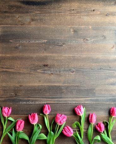 ピンク色のチューリップたくさん 黒木材背景の写真素材 [FYI01173349]