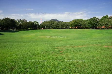 夢の島公園芝生広場の写真素材 [FYI01173501]