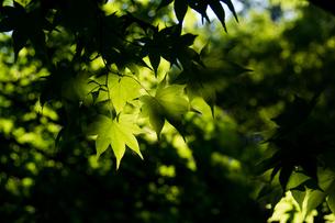 新緑の写真素材 [FYI01173902]