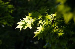 新緑の写真素材 [FYI01173903]