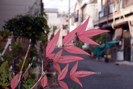 路上の紅葉の写真素材 [FYI01173941]
