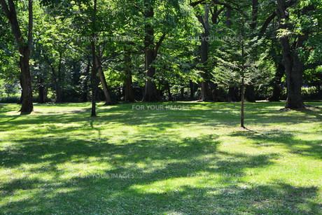 初夏の公園の写真素材 [FYI01174107]