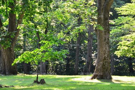 初夏の公園の写真素材 [FYI01174108]